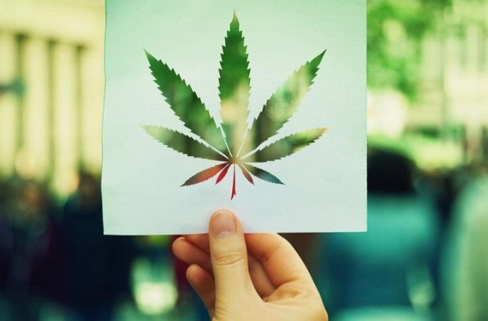 Regulación del cannabis en Chile